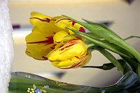 Tulpen im Schnee