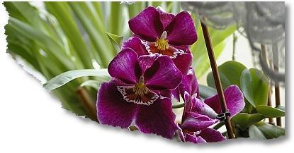 2008-03-28-Orchidee