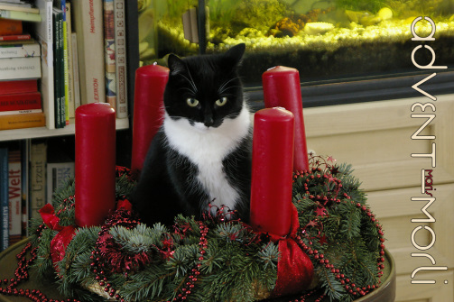 Morli im Advent